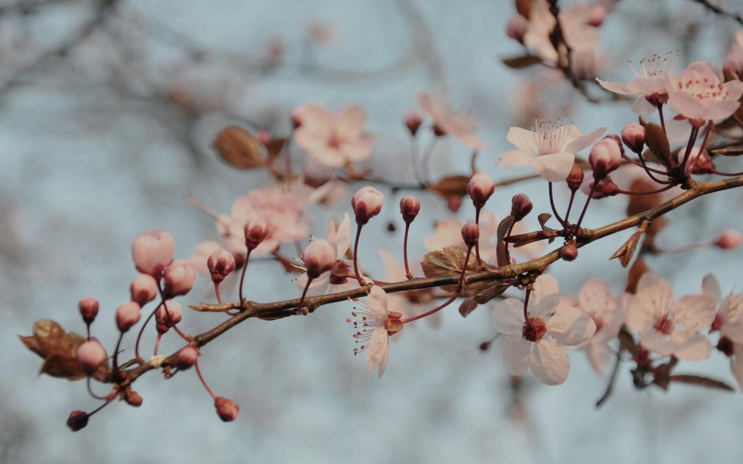 봄 오픈 할인 : 바다 벚꽃따라 달려가는 나의 집